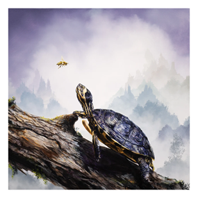 Box Turtle & Honeybee by Brian Mashburn