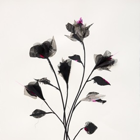 Shadow Flowers (Pink) by Rob Wass