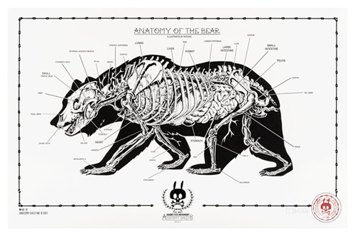 Anatomy Of The Bear: Anatomy Sheet No. 14 by Nychos Editioned ...